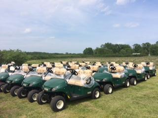 2018 E-Z-Go Fleet Carts