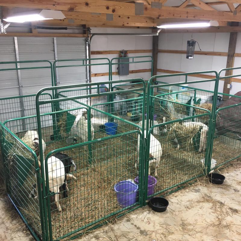 2019 Sheep & Goat Panels